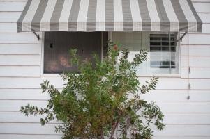 botanic-gardens-family-photographs (6 of 6)
